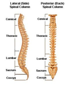 chronic-vs-acute-back-pain